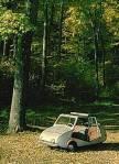 Wald 1JPG